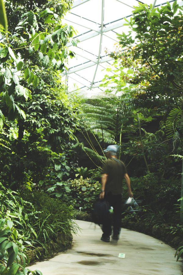 都会のジャングル=植物園に行く